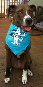 lyra dog wearing bandana