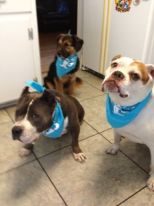 dogs with bandanas