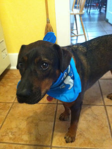 photo of dog named Kiah wearing bandana