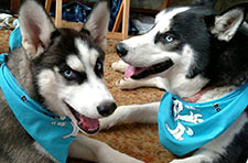 photo of two dogs wearing canines for clean water bandanas