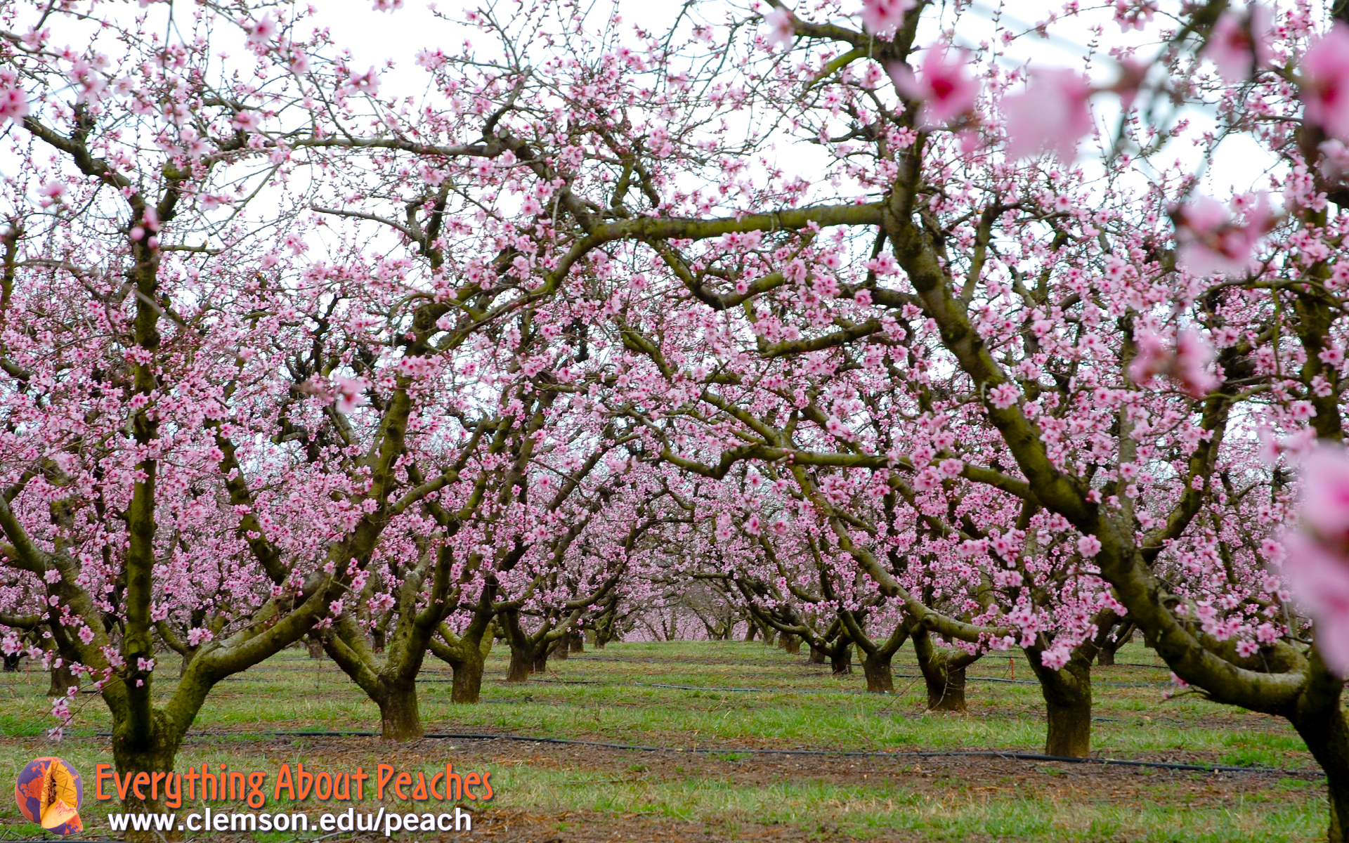 christian singles in peach orchard Explore ~cherielaurie~'s board ~cottage on peach orchard lane~ on pinterest | see more ideas about peach orchard, adorable animals and adorable kittens.