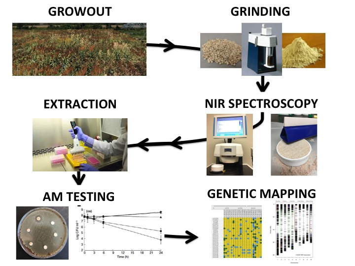 Steps to genetic mapping